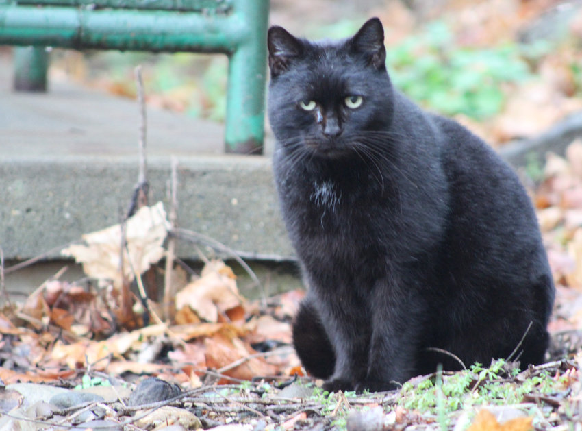 Londonderry Township staff take care of cats that live outside of the municipal building.