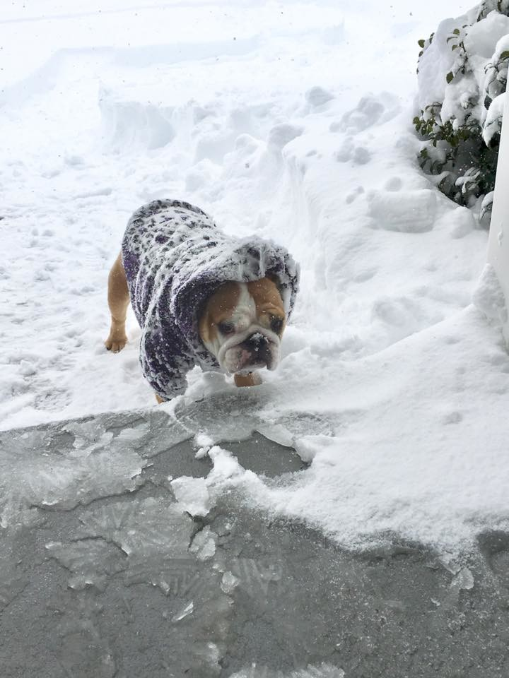 Mandy Michael's dog Leia in Lower Swatara Township.