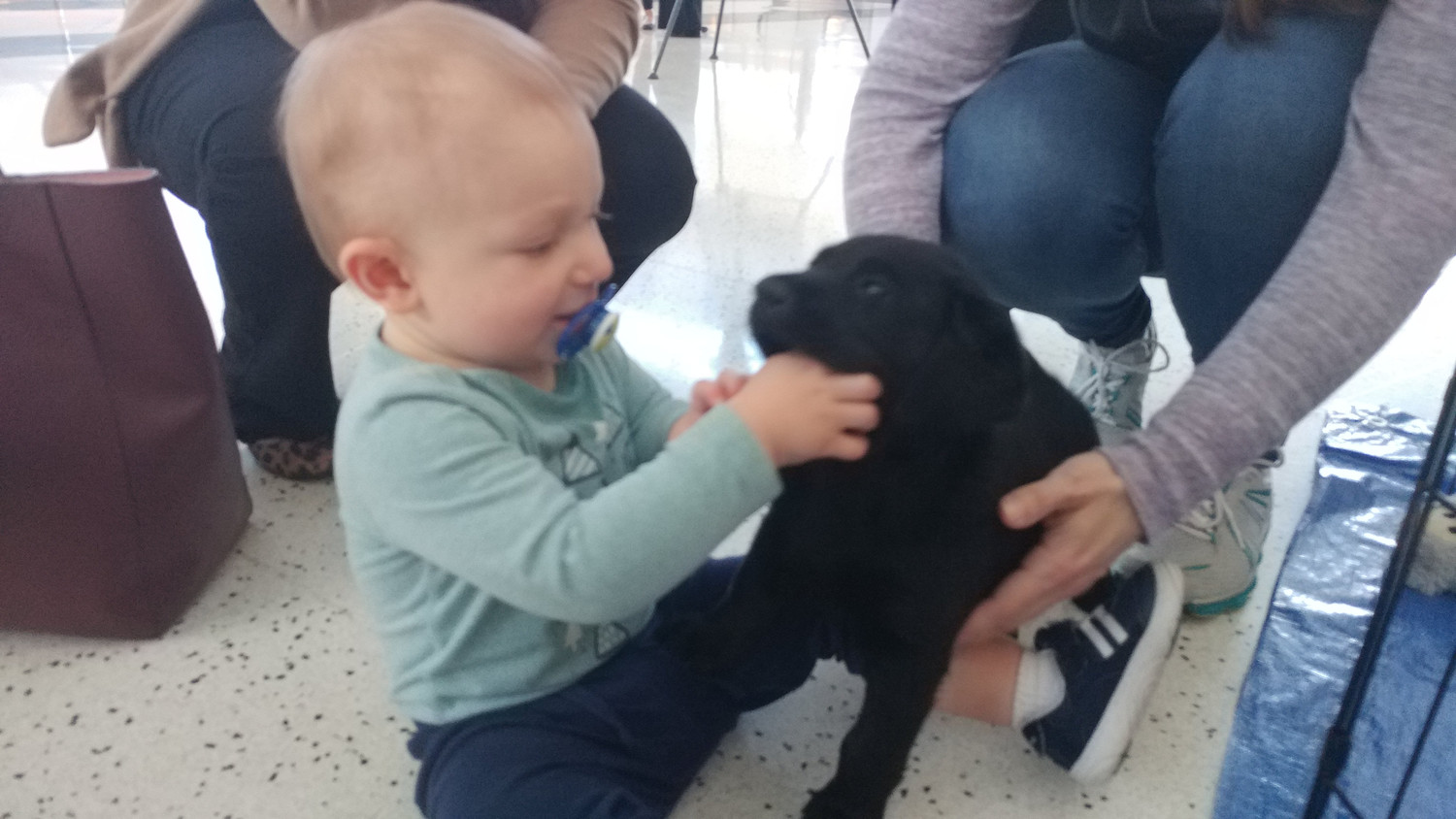 Graden Mumma makes a new friend at the Harrisburg International Airport in a Susquehanna Service Dog labrador puppy.
