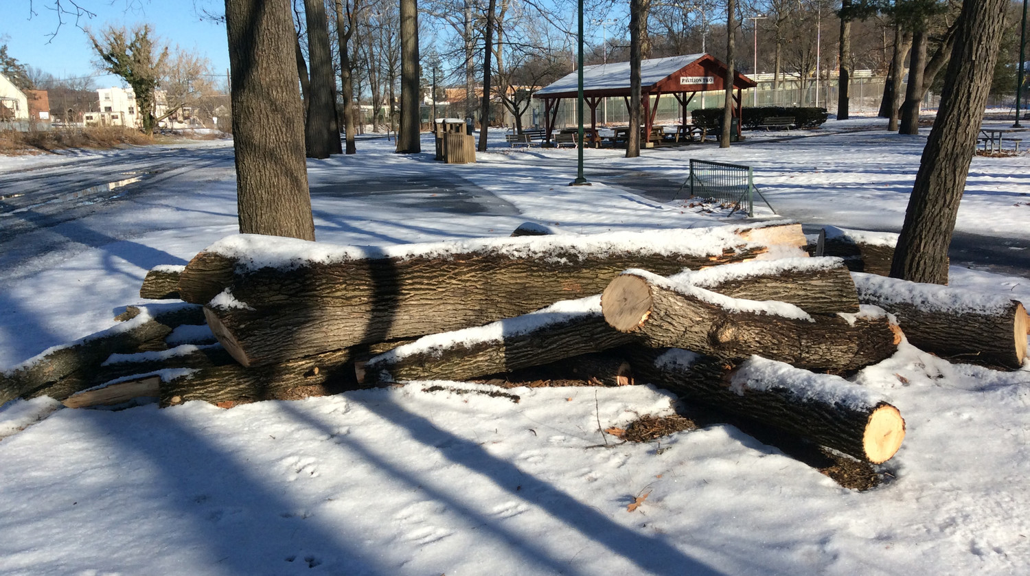 This pile of logs in this Feb. 5 photo is evidence of some of the recent tree-cutting that has been necessary in Hoffer Park, according to Middletown Public Works Director Greg Wilsbach.