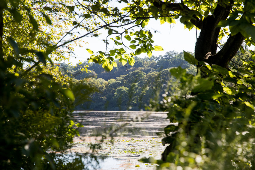 The scene in New York is a little greener thanks to the efforts of lawmakers like state Sen. Alessandra Biaggi and Assemblyman Jeffrey Dinowitz, who both received perfect scores from the New York League of Conservation Voters.