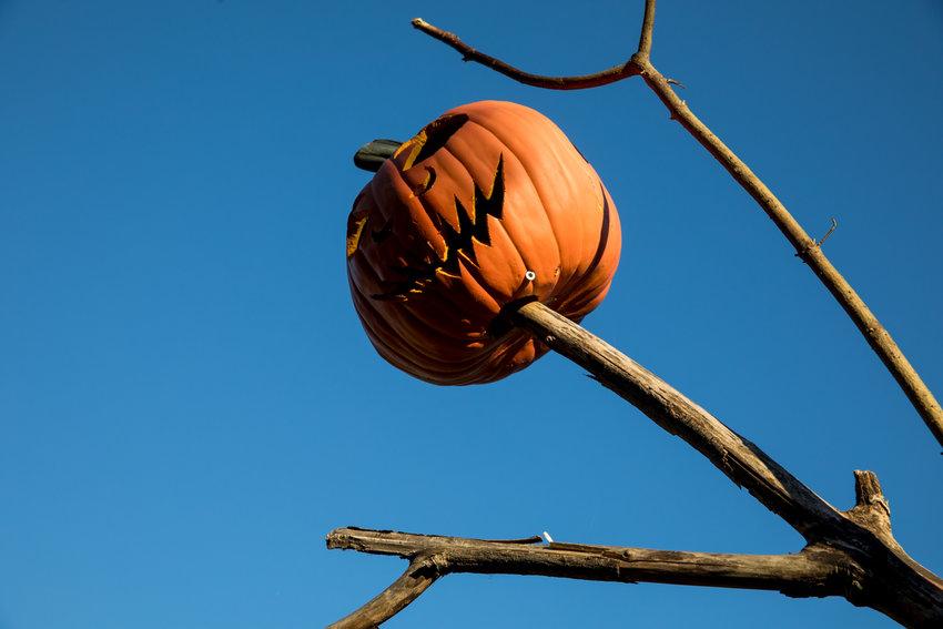 A spooky pumpkin scarecrow looms over the Everett Children's Adventure Garden in the New York Botanical Garden. In the run up to Halloween, the garden converts the space into the Spooky Pumpkin Garden.