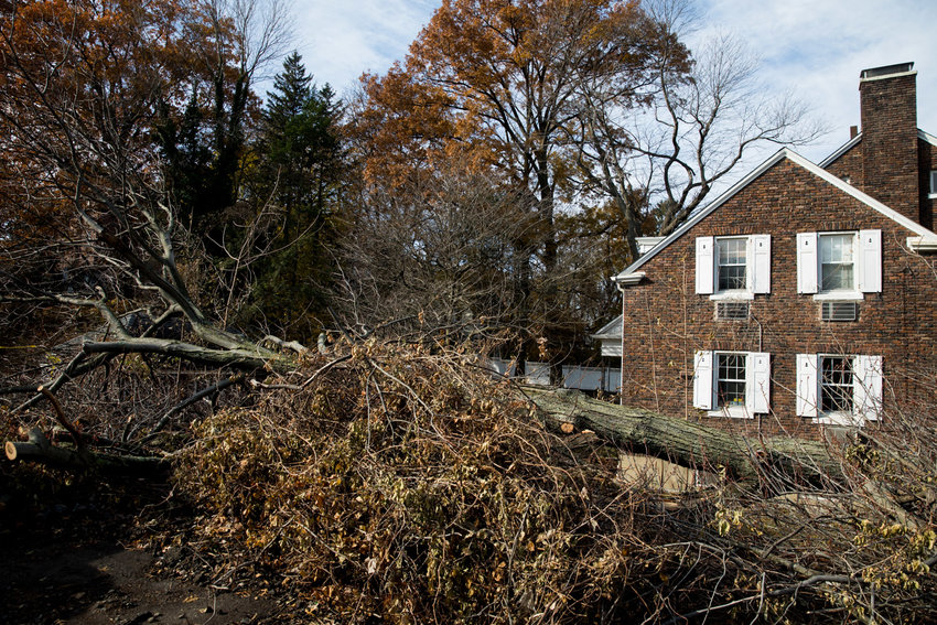 It is unclear who is responsible for the felled tree that lays between a private residence and the parking lot for Schervier Rehabilitation and Nursing Center near the corner of West 231st Street and Independence Avenue. What is clear to city officials, however, is that it was brought down against Special Natural Area District regulations.