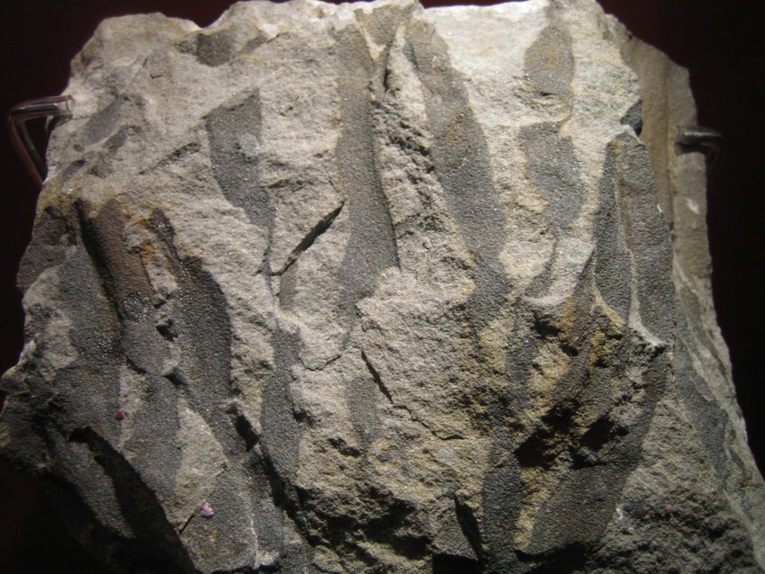 There's nothing wrong with these tree roots, except they might contain some ancient secrets. These fossilized roots of Eospermatopteris erianus are similar to those found just upstate in Gilboa.