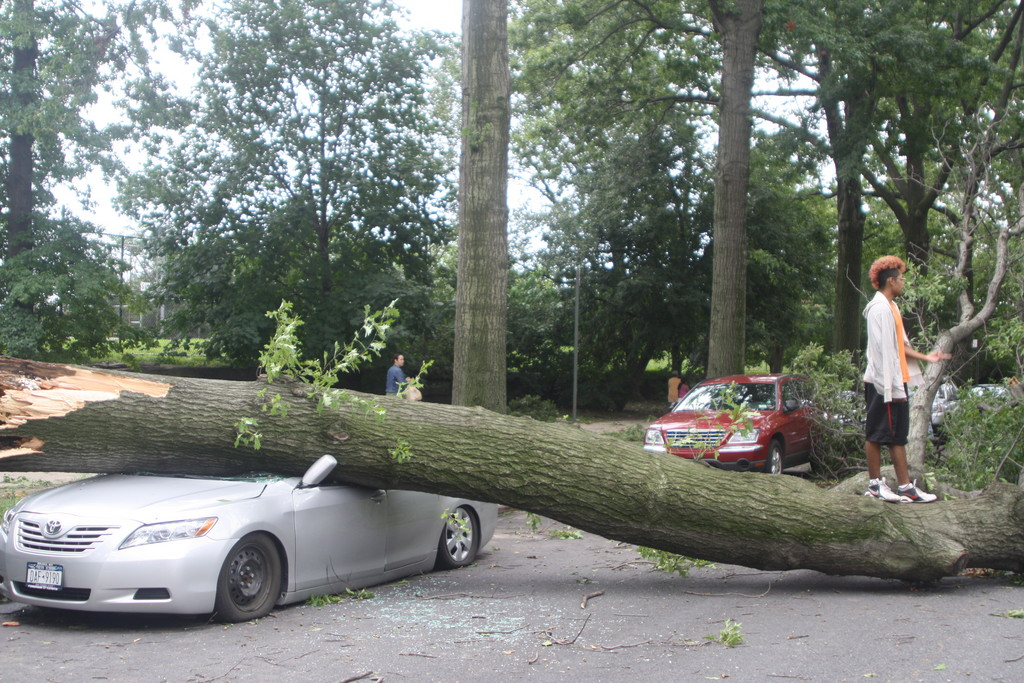 A tree lies across a Toyota parked on Sedgwick Avenue Sunday afternoon.