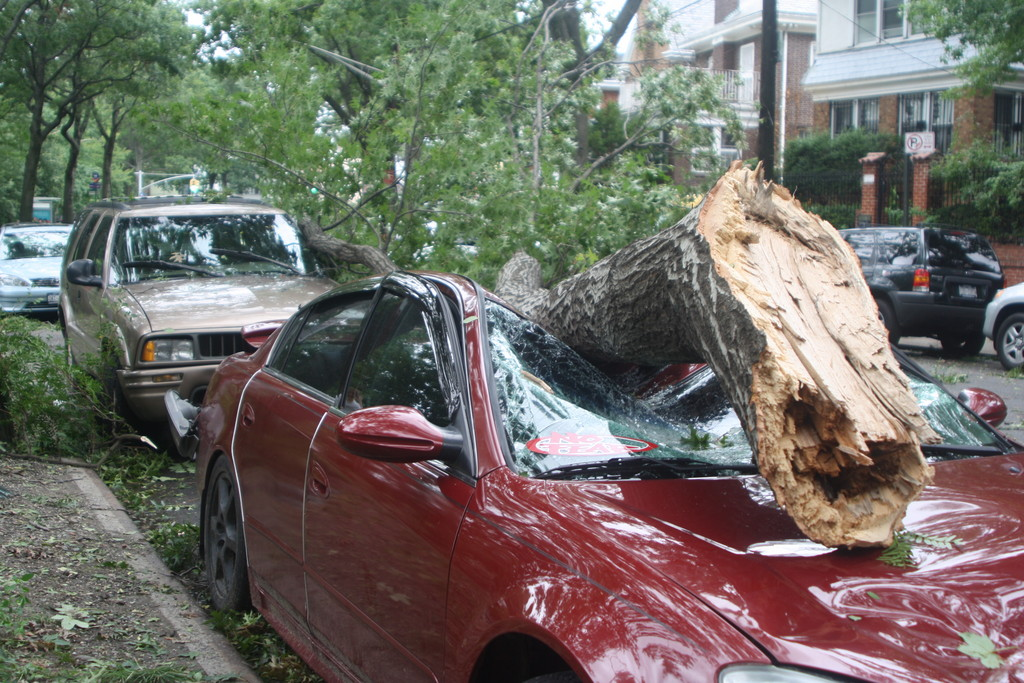 A tree limb came down on top of a car parked on Sedgwick Avenue.