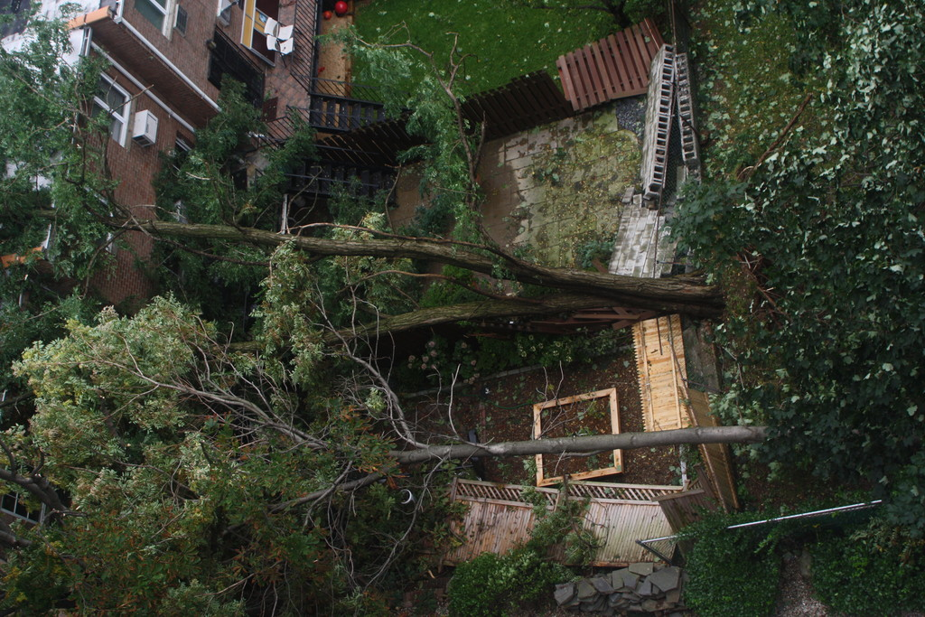 A bird's eye view of a fallen tree in the backyard of a house on Independence Avenue near West 231st Street.
