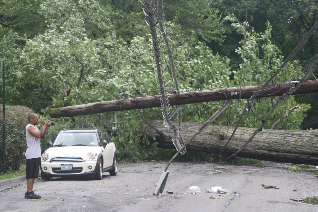 Two large trees fell down on West 231st Street, dragging down four utility poles with them, during Hurricane Irene.