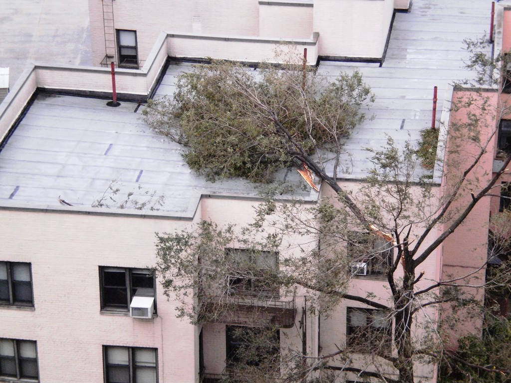 A reader shared this photo of a tree collapsed on a building near the corner of Kappock Street and Johnson Avenue.