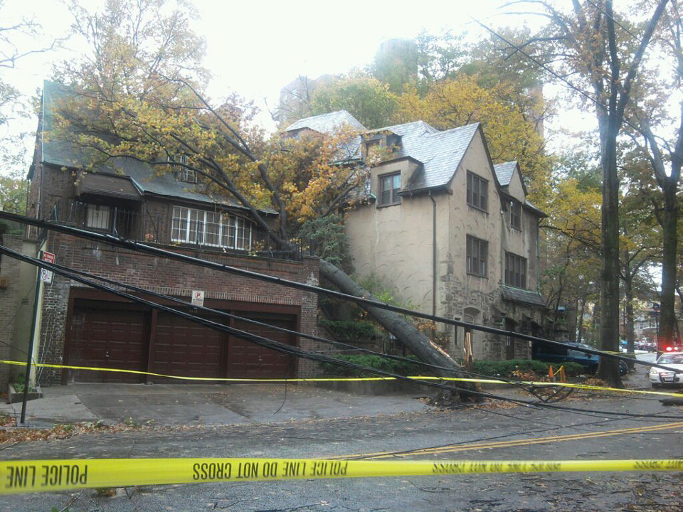 Lex Moran-Solero shared this photo of a tree sprawled across a Sedgwick Avenue home.