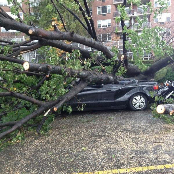 Danielle Rehfeld shared this photo of a tree crushing a car near Skyview.