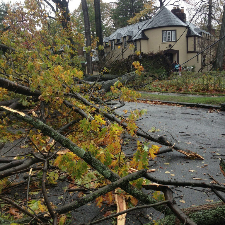 Danielle Rehfeld shared this photo of a tree tugging down electric lines in Fieldston.
