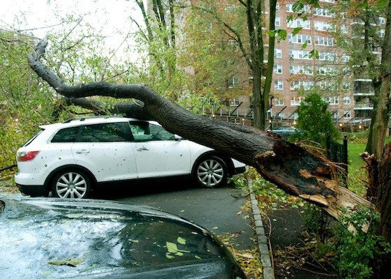 Andrea Mistri submitted this image of a downed tree crushing a parked car at Briar Oaks.