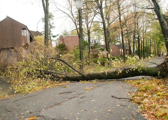 Andrea Mistri shared this photo of a downed tree blocking the road on Grosvenor Avenue and West 246th Street.