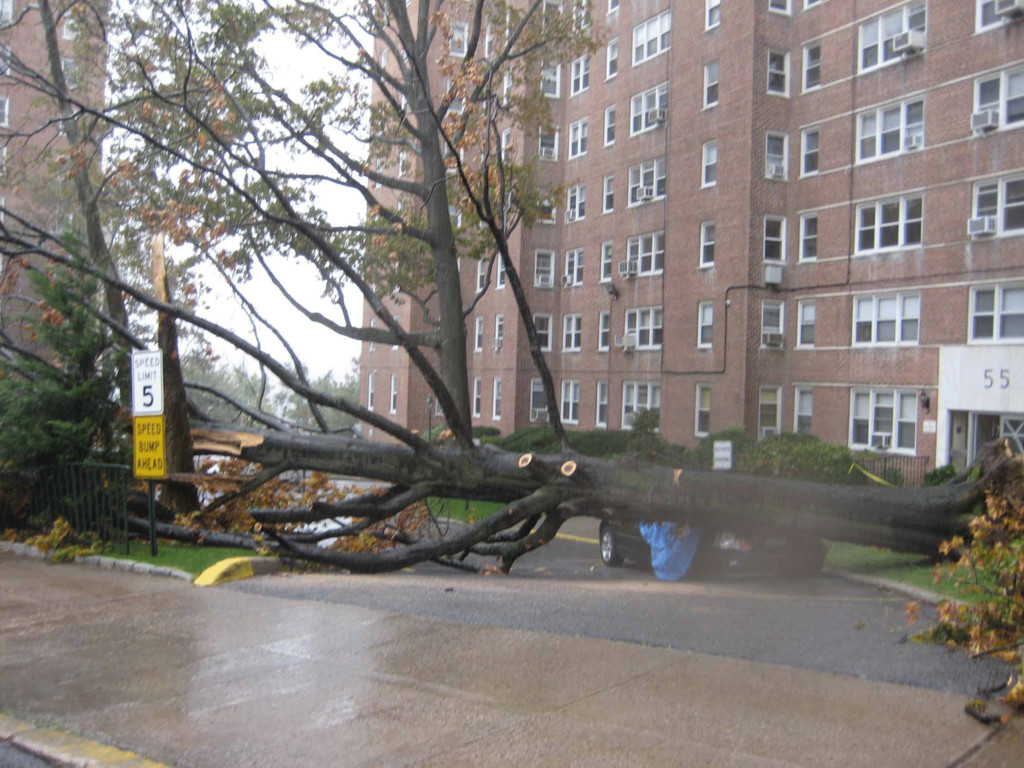Judith H. Block shared this photo of a tree that fell in her building's driveway.