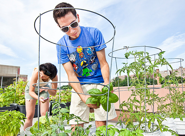 Gabriel Quiroz, 21, a Manhattan College student harvests basil among other vegetables on the rooftop of a college parking garage on Saturday.