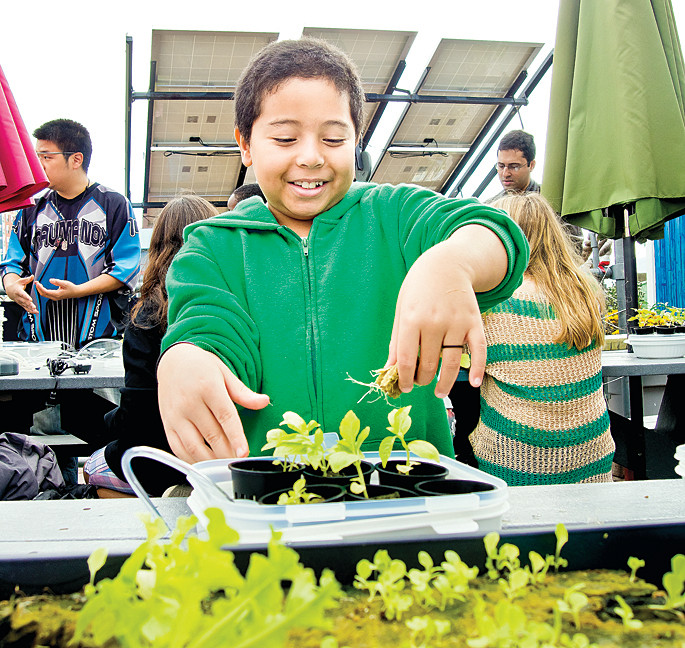 Allen Velazquez, 10, plants basil in a hydroponic tray he got to take home.