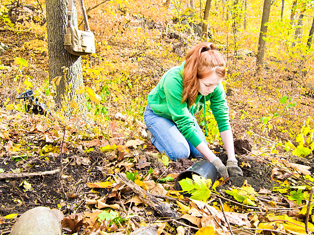 Maggie Horan, 22, plants a tree on Saturday near the John Muir nature trail in Van Cortlandt Park. Each month volunteers gather to participate in a forest restoration program.
