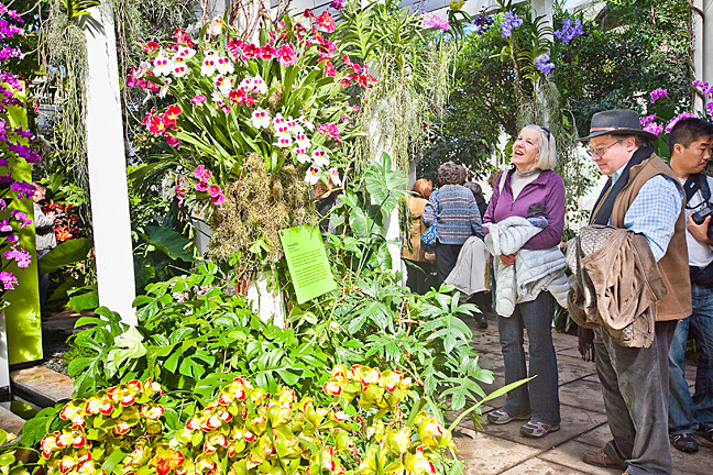 Master gardener Grey Moonie and Ros Brady admire this year's orchid show.