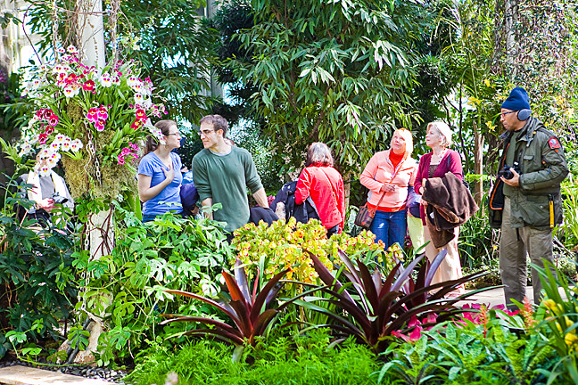The orchid show is one of the most popular events on the year at the NYBG.