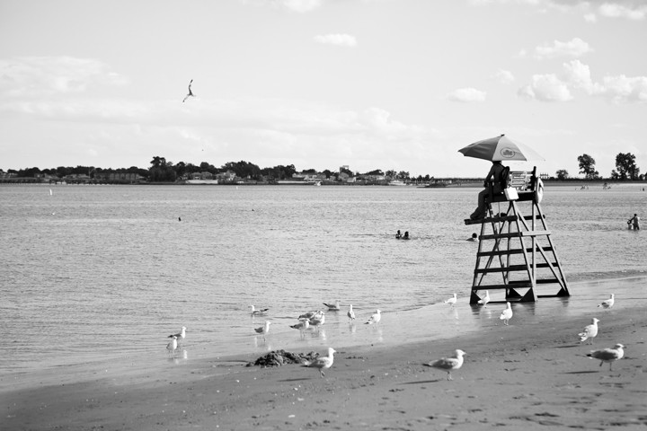 A flock of seagulls keeps watch over a lifeguard, who keeps watch over the water.