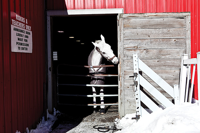 ROSSI, 15, a Dutch Warmblood at Riverdale Equestrian Centre at Van Cortlandt Park on Jan. 24.