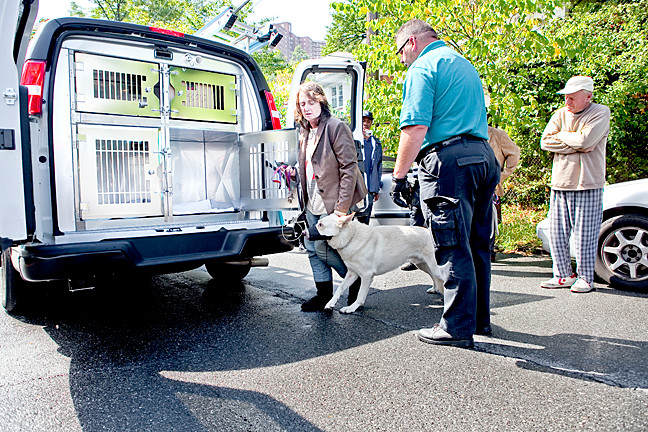 Philomena McNamara places one of her dogs in the Animal Care & Control of New York vehicles from her home on 6045 Riverdale Avenue on Tuesday, under the supervision of animal control workers and the NYPD.