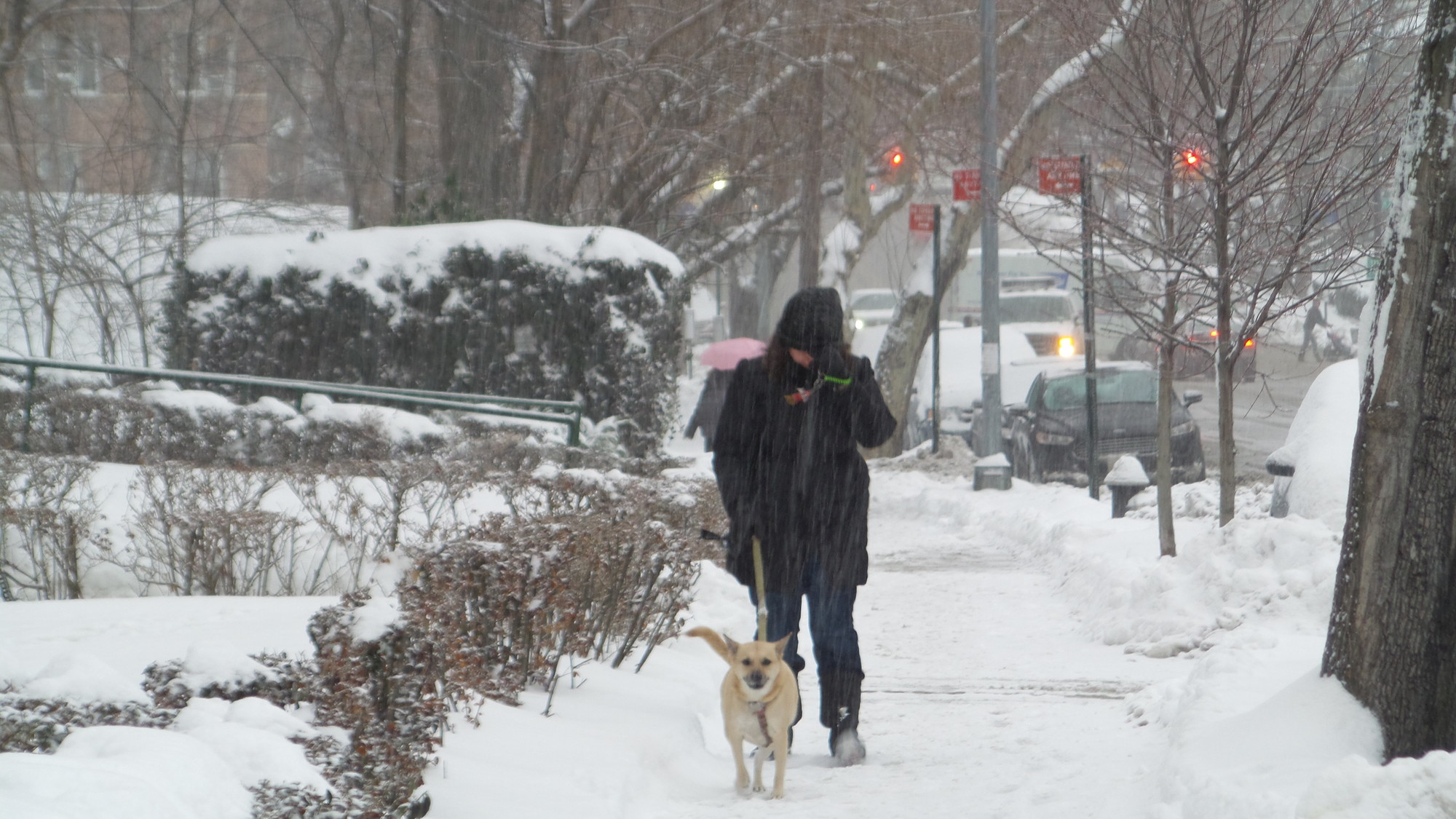 Dog walker on Riverdale Avenue