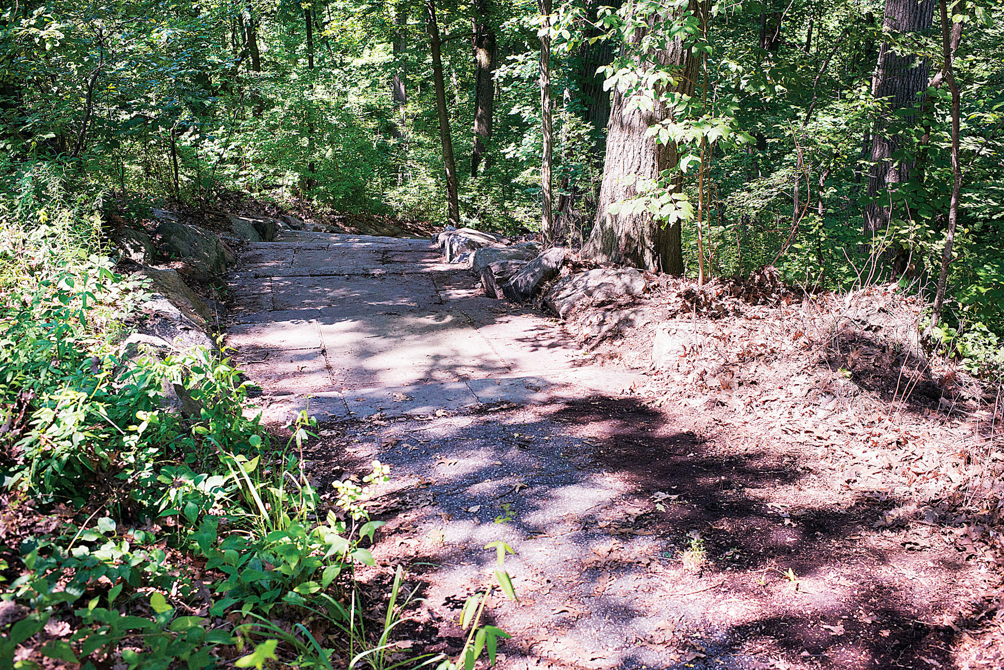 Part of the trails cleared by a group of young men and women in Van Cortlandt Park on July 16 as part of a summer jobs program.