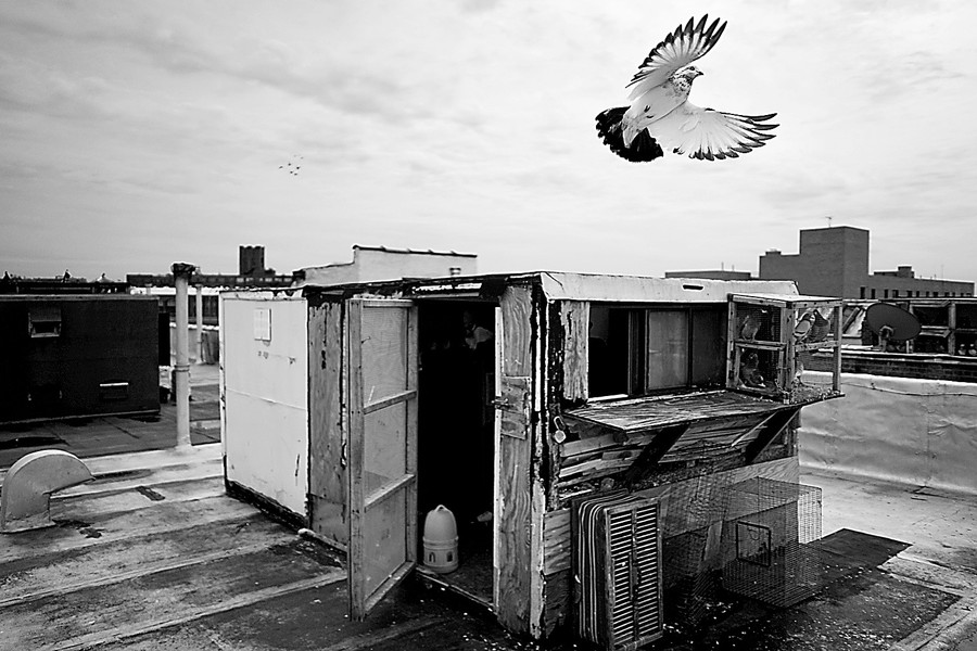A pigeon takes flight from its rooftop coop in the South Bronx in November. The image is part of an exhibit of young photographers' work