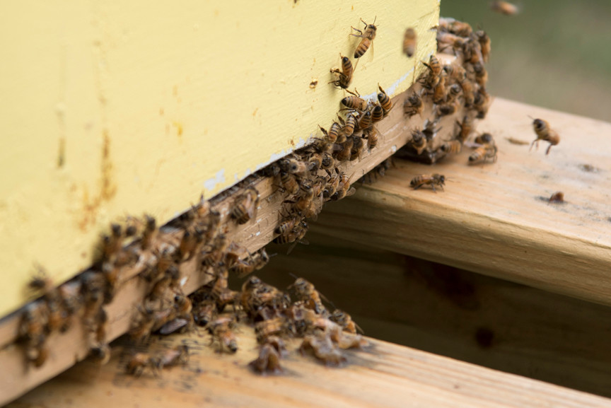 More than 400,000 honey bees live at Woodlawn.