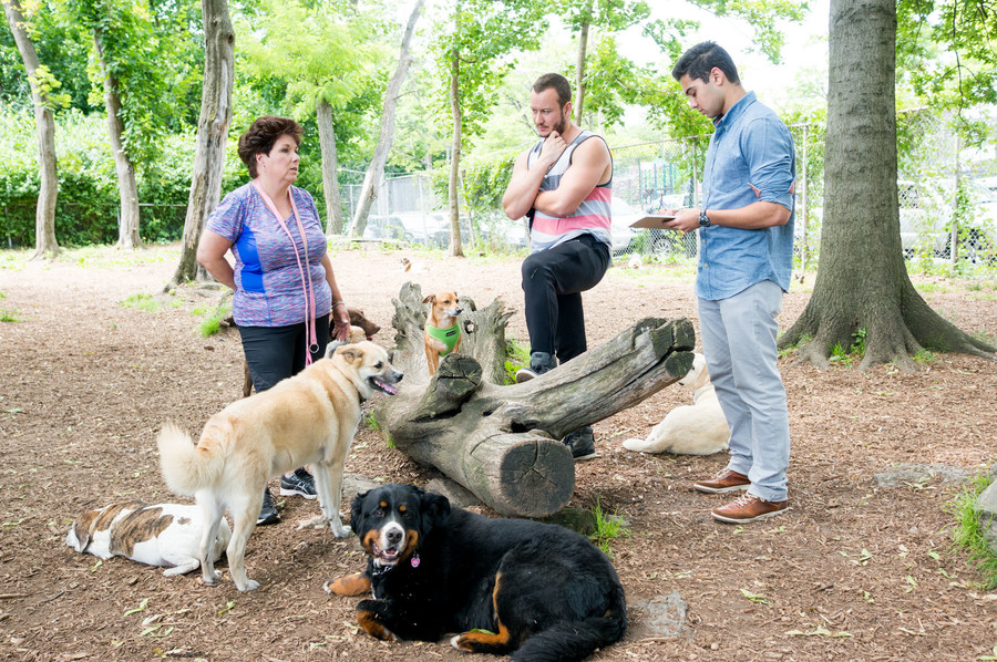 Remi Kumar talks with two dog walkers — Jackie Gomez and a man who gave his name as Vin T. — with Well Rounded Hound, a dog day care service that frequents the Seton Park dog run.