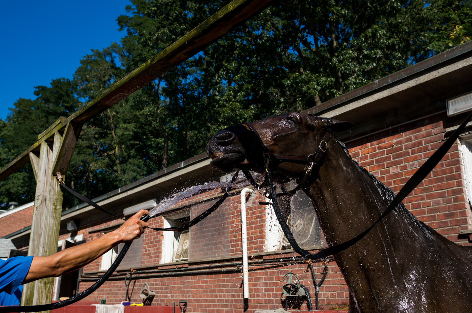 Warmblood horse Monty, gets a bath at the Riverdale Stables. He's one of the 80 horses housed at the Vannie location.