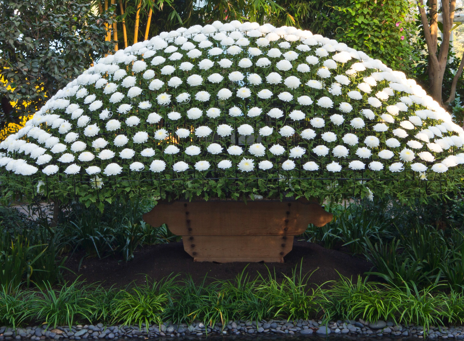It takes a lot of patience and hard work to create what is known as the ozukuri, or the 'thousand-bloom' chrysanthemum.