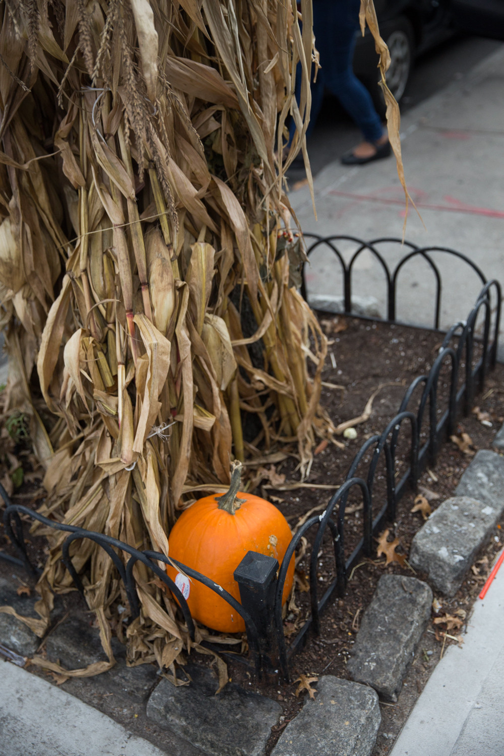 A lone pumpkin sits in the sidewalk planter on Riverdale Avenue that John's Botany Bay Florist fills with pumpkins every year to decorate the block. Several days before Halloween this year, all but two of the pumpkins disappeared.
