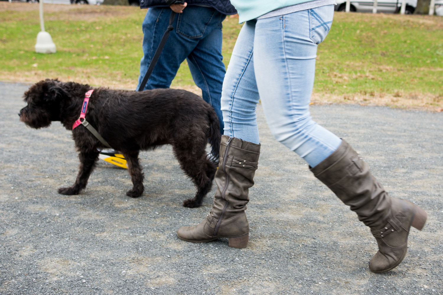Pumkin Paws focuses on walking no more than two or three dogs at a time, which provides a better experience for the dog. They wanted to differentiate themselves from those walk 10 to 15 dogs at a time.