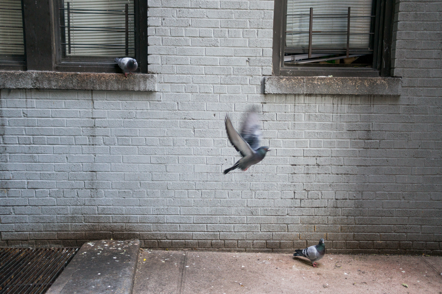 Pigeons congregate outside 1 Marble Hill Ave., a building that has been plagued by problems in recent years. That's slowly changing, however, thanks to the efforts of residents Alycya Miller and Crystal Hawkins.