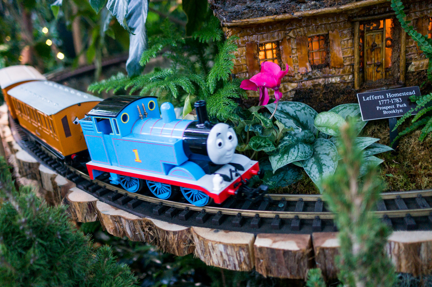 Thomas the Tank Engine rounds a corner near a replica of the Lefferts Homestead in the Holiday Train Show at the New York Botanical Garden.