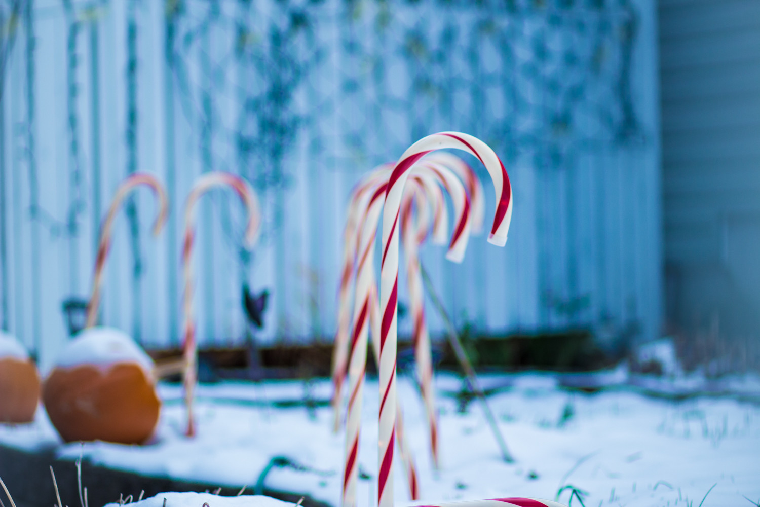Plastic candy canes stand in groups in a yard on Corlear Avenue. The candy version was made by hand until 1921 when Brasher Westerfield invented a machine that automated the process.