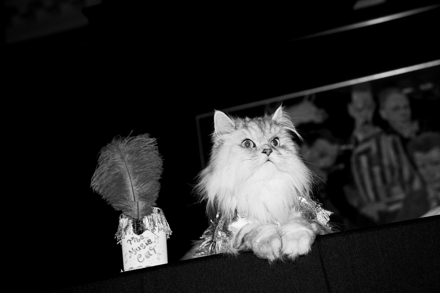 The Algonquin Hotel's annual Cat Fashion Show showcased some of the most sharply dressed felines on Aug. 3, 2017.