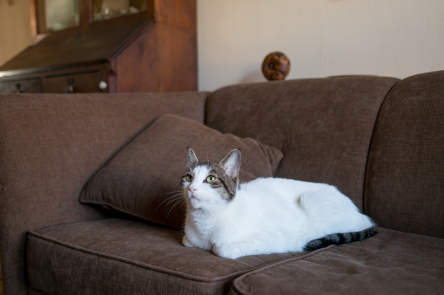 Ivan Braun's 5-year-old cat Lulu rests on a couch. Lulu was abandoned as a kitten outside of Braun's home, which became Lulu's home.