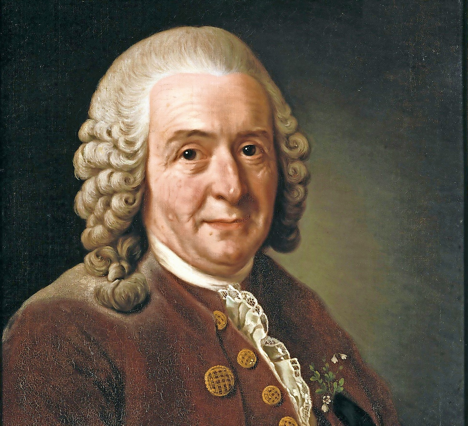 Carl Linnaeus was a Swedish doctor who loved plants. In fact, alot of the credit for how we classify plants today is because of his work - and others.