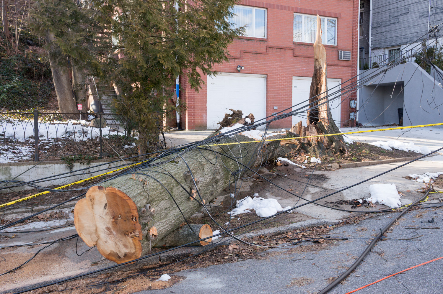 The remains of a massive tree lie on the ground after a fierce winter storm ripped through its trunk March 2, damaging power lines on Sylvan Avenue between West 256th and West 254th streets. It caused prolonged outages that were still not resolved as of last Friday.