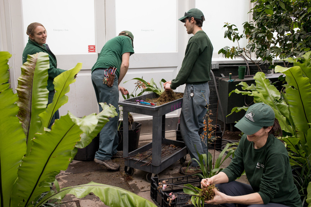 New York Botanical Garden employees prepare orchids to replace ones that have faded in the installations by floral designer Daniel Ost.