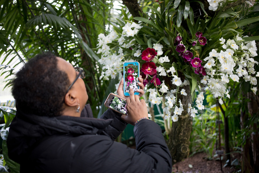 Orchids could not escape visitors' cameras for the show that is back for the 16th time at the New York Botanical Garden.