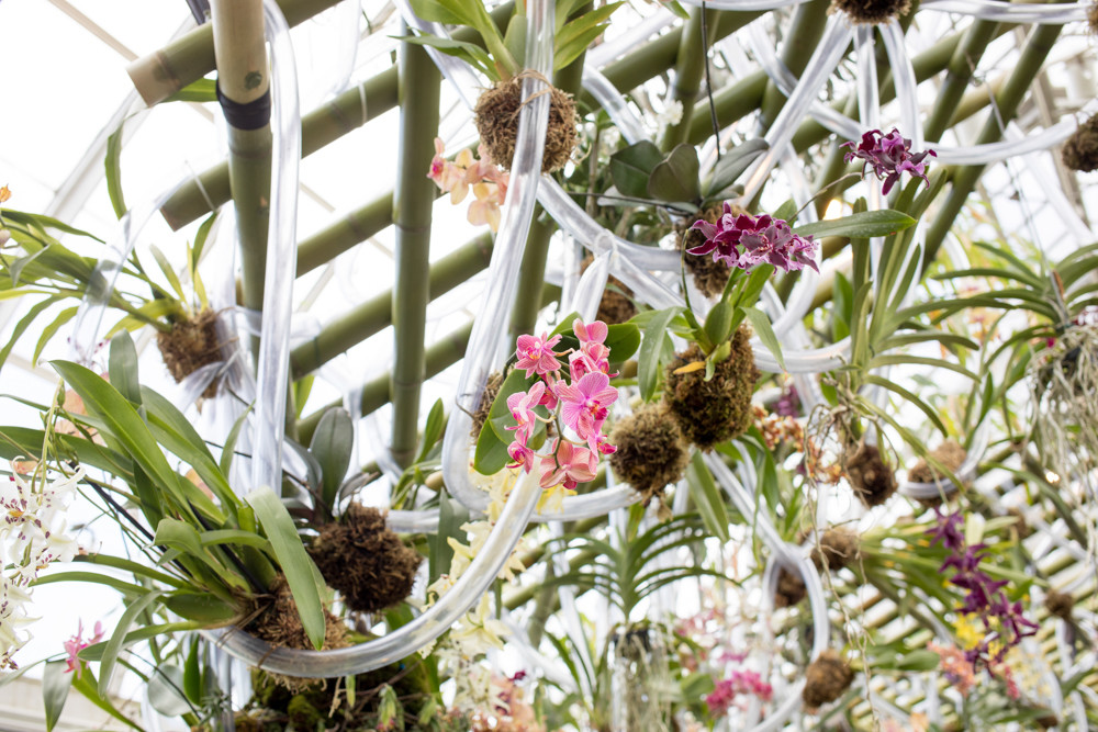 The orchid show at the New York Botanical Garden features thousands of orchids in intricate installations by the Belgian floral designer Daniel Ost.