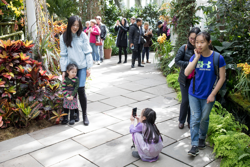 Daniel Ost's installations for the New York Botanical Garden's orchid show made for dynamic backdrops for family pictures and selfies.