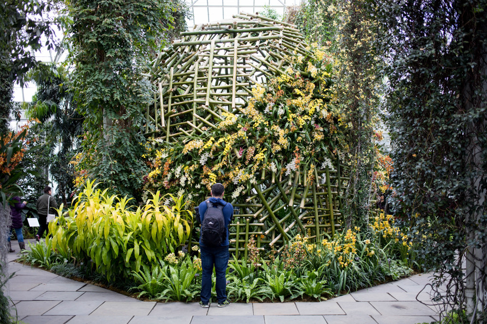 The orchid show features a series of installations by the Belgian floral artist Daniel Ost who trained in ikebana, the Japanese art of flower arrangement. Ost is widely considered to be the world's best flower designer.