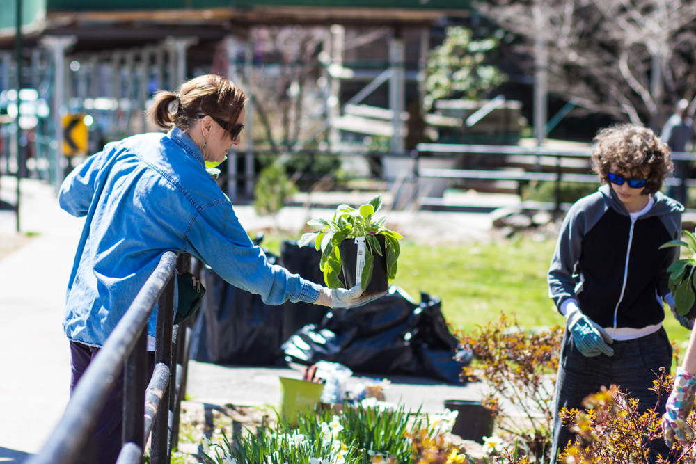 Jacqueline Hosford, a member of Stewards of Lower Brust Park, hands a potted plant over to volunteer Shane Savasta. Last weekend, Hosford and others worked to clean up and enhance the park.