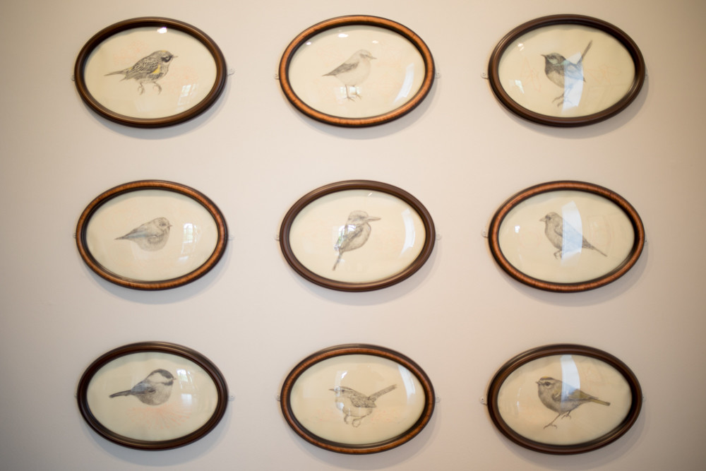 Tanya Chaly's drawings of birds evoke 19th-century images of the natural aviators. Her work is on view in Wave Hill's new exhibition, 'Avifauna: Birds + Habitat.'